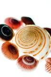 Seashells image stock