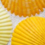 Seashells Lizenzfreie Stockbilder