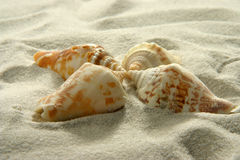 Seashells (3) photographie stock