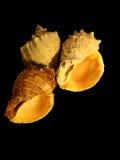 seashells 3 стоковые фото