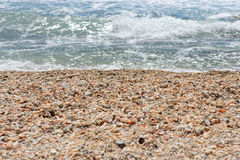 Seashells Стоковая Фотография RF