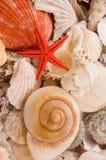Seashells fotos de archivo libres de regalías
