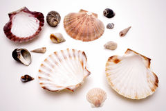 Seashells Photographie stock libre de droits