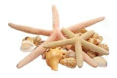 Seashells Fotografia Stock Libera da Diritti
