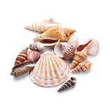 seashells Stockbilder