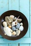 Seashells стоковые изображения