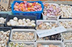 seashells Obrazy Royalty Free