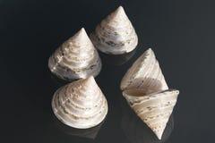 seashells Foto de Stock Royalty Free