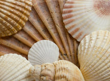 Seashells fotos de stock royalty free