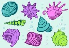 seashells Stockbild