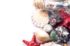 seashells Zdjęcia Stock
