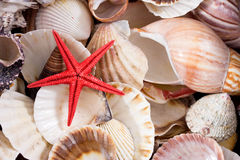 seashells Obraz Royalty Free