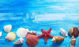 Seashells Стоковое Изображение RF