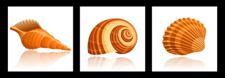 Seashells. Illustration of three seashells with reflection in white Royalty Free Stock Photos
