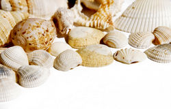 Seashells. On white with a lot of copy space Stock Photography