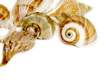 Seashells. On white with a lot of copy space Royalty Free Stock Photos