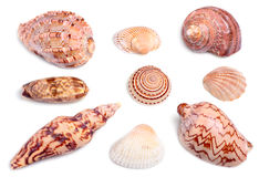 Seashells Stockbild