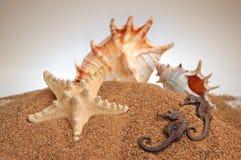 Seashells. On a sand background stock image