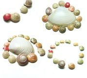 seashells Стоковые Фотографии RF