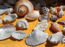 Seashells Immagini Stock Libere da Diritti
