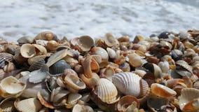 seashells Στοκ φωτογραφίες με δικαίωμα ελεύθερης χρήσης