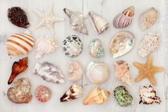 seashells obrazy royalty free
