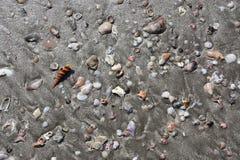 seashells immagini stock