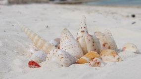 seashells Stockfotos