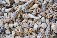 Seashells Стоковое Изображение