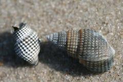 Seashells imágenes de archivo libres de regalías