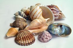 seashells Foto de Stock Royalty Free
