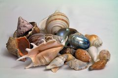 seashells Imagem de Stock Royalty Free