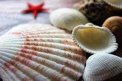 seashells Imagem de Stock