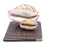 seashells Στοκ φωτογραφία με δικαίωμα ελεύθερης χρήσης