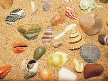 seashells Obraz Stock