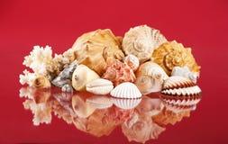 Seashells. Beautiful seashells on the glass Royalty Free Stock Image