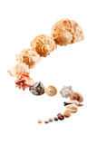 Seashells. Beautiful seashells on the glass Royalty Free Stock Images