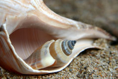 Seashells Photo stock