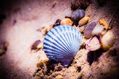 seashells Στοκ Εικόνα