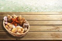 seashells Lizenzfreies Stockbild
