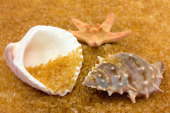 Seashells. And starfish on golden background Stock Image