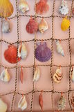 seashells Στοκ Φωτογραφίες