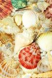 seashells photos stock