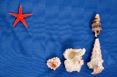Seashells Stock Photos