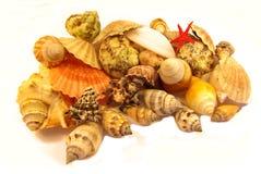 Seashells aislados Foto de archivo
