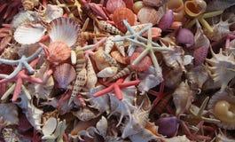 Seashells als Hintergrund Lizenzfreies Stockfoto