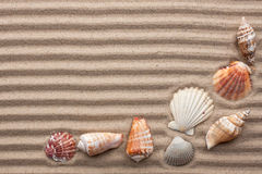 Seashells amid undulating sand Stock Images
