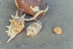 Seashells and amphora in the sand on the beach. Selective focus royalty free stock photography