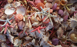 Seashells as background. Bunch of seashells on still life. Image can be used as background royalty free stock photo