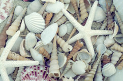 Seashells as background Stock Images